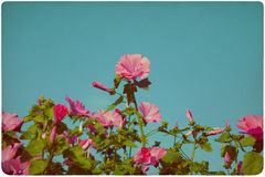 Fondo del prado del Wildflower Foto de archivo libre de regalías