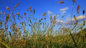 Fondo del prato dei fiori e dell'erba stock footage