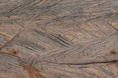 Fondo del primer de la textura de madera del árbol del corte Imágenes de archivo libres de regalías