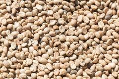 Fondo del primer de los granos de café Granos de café sin tostar verdes Foto de archivo libre de regalías