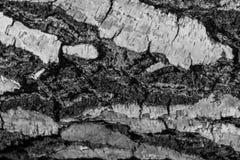 Fondo del primer de madera de la textura Imagenes de archivo