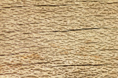 Fondo del primer de madera de la textura Fotografía de archivo
