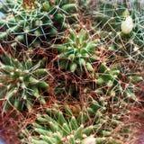 Fondo del primo piano del cactus Vista superiore fotografia stock