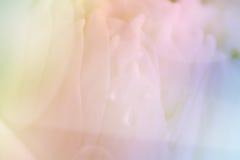 Fondo del primo piano del petalo di Lotus Fotografia Stock Libera da Diritti