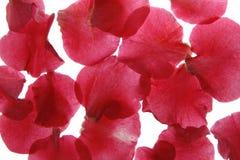 Fondo del pétalo de la flor Foto de archivo libre de regalías