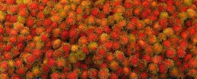 Fondo del rambutan, plantly frutti Fotografia Stock
