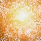 Fondo del árbol del otoño Imagen de archivo libre de regalías
