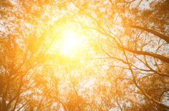 Fondo del árbol del otoño Foto de archivo libre de regalías