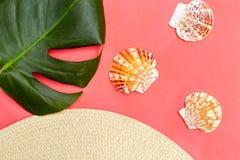 Fondo del recorrido Conchas marinas y fondo coralino de vida Endecha plana fotos de archivo