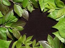 Fondo del resorte con las hojas verdes Hojas verdes de los jóvenes en fondo marrón Lugar para el texto Para el diseño Primer Visi Imagen de archivo libre de regalías