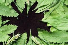 Fondo del resorte con las hojas verdes Hojas verdes de los jóvenes en un fondo de la gamuza marrón Lugar para el texto Para el di Fotografía de archivo libre de regalías