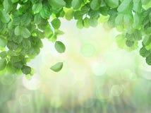Fondo del resorte con las hojas y el efecto del brokeh Fotos de archivo libres de regalías