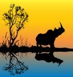 Fondo del rinoceronte Imágenes de archivo libres de regalías