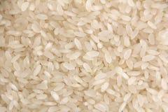 Fondo del riso Fotografia Stock Libera da Diritti