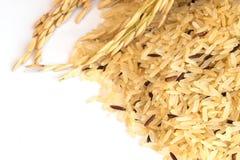 Fondo del riso di Gaba, riso sbramato germinato, propertie medicinale Immagine Stock