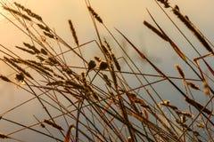 Fondo del rocío de la hierba del amanecer Imagen de archivo libre de regalías