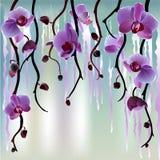Fondo del saludo con las orquídeas Foto de archivo