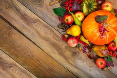 Fondo del saludo de la acción de gracias con la calabaza, manzanas, pera, poli Foto de archivo libre de regalías