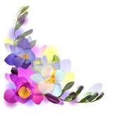 Fondo del saludo del vector con las flores del freesia Fotos de archivo libres de regalías
