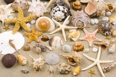 Fondo del Seashell Fotos de archivo libres de regalías