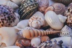 Fondo del Seashell Porciones de diversas conchas marinas llenadas juntas Colección de las conchas marinas Opinión del primer de m fotografía de archivo libre de regalías