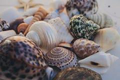 Fondo del Seashell Porciones de diversas conchas marinas llenadas juntas Colección de las conchas marinas Opinión del primer de m imágenes de archivo libres de regalías