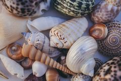 Fondo del Seashell Porciones de diversas conchas marinas llenadas juntas Colección de las conchas marinas Opinión del primer de m foto de archivo