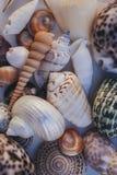 Fondo del Seashell Porciones de diversas conchas marinas llenadas juntas Colección de las conchas marinas Opinión del primer de m fotografía de archivo