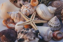 Fondo del Seashell Porciones de diversas conchas marinas llenadas juntas Colección de las conchas marinas Opinión del primer de m imagenes de archivo