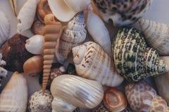 Fondo del Seashell Porciones de diversas conchas marinas llenadas juntas Colección de las conchas marinas Opinión del primer de m fotos de archivo libres de regalías