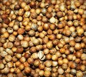 Fondo del seme di coriandolo Immagini Stock Libere da Diritti
