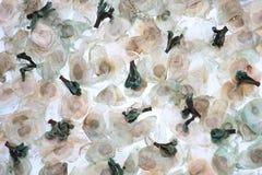 Fondo del seme e del fiore Fotografia Stock Libera da Diritti