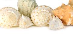 Fondo del shell Fotografía de archivo