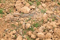 Fondo del suolo di Cultivted Immagini Stock