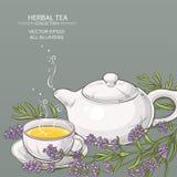 Fondo del tè della lavanda Immagini Stock Libere da Diritti