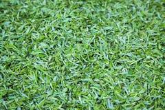 Fondo del tè verde Immagini Stock