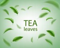 Fondo del té verde Giro realista de las hojas de té en el aire Elementos florales para el diseño, publicidad, empaquetando Vector Libre Illustration