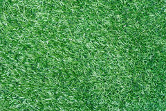 Fondo del tappeto erboso Fotografia Stock