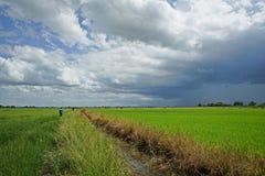 Fondo del temporal de lluvia, paisaje Tailandia del campo de arroz Imágenes de archivo libres de regalías