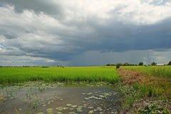 Fondo del temporal de lluvia, paisaje Tailandia del campo de arroz Fotografía de archivo