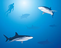 Fondo del tiburón Foto de archivo libre de regalías
