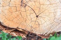 Fondo del tocón de árbol Fotos de archivo