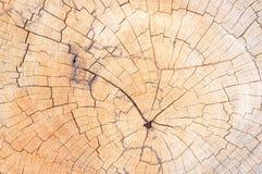 Fondo del tocón de árbol Fotos de archivo libres de regalías
