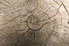 Fondo del tocón de árbol Foto de archivo libre de regalías