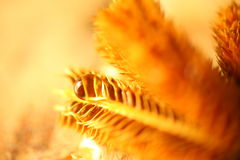 Fondo del trigo Imagen de archivo libre de regalías