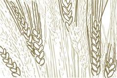 Fondo del trigo stock de ilustración