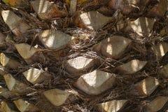 Fondo del tronco della palma fotografia stock libera da diritti