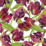 Fondo del tulipán de la acuarela Fotografía de archivo