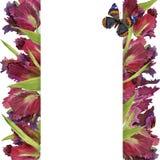 Fondo del tulipán de la acuarela Fotografía de archivo libre de regalías