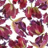 Fondo del tulipán de la acuarela Imagenes de archivo